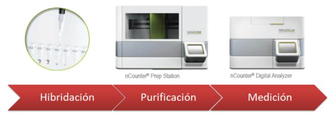procedimiento prosigna PAM50 resultados medición n-counter